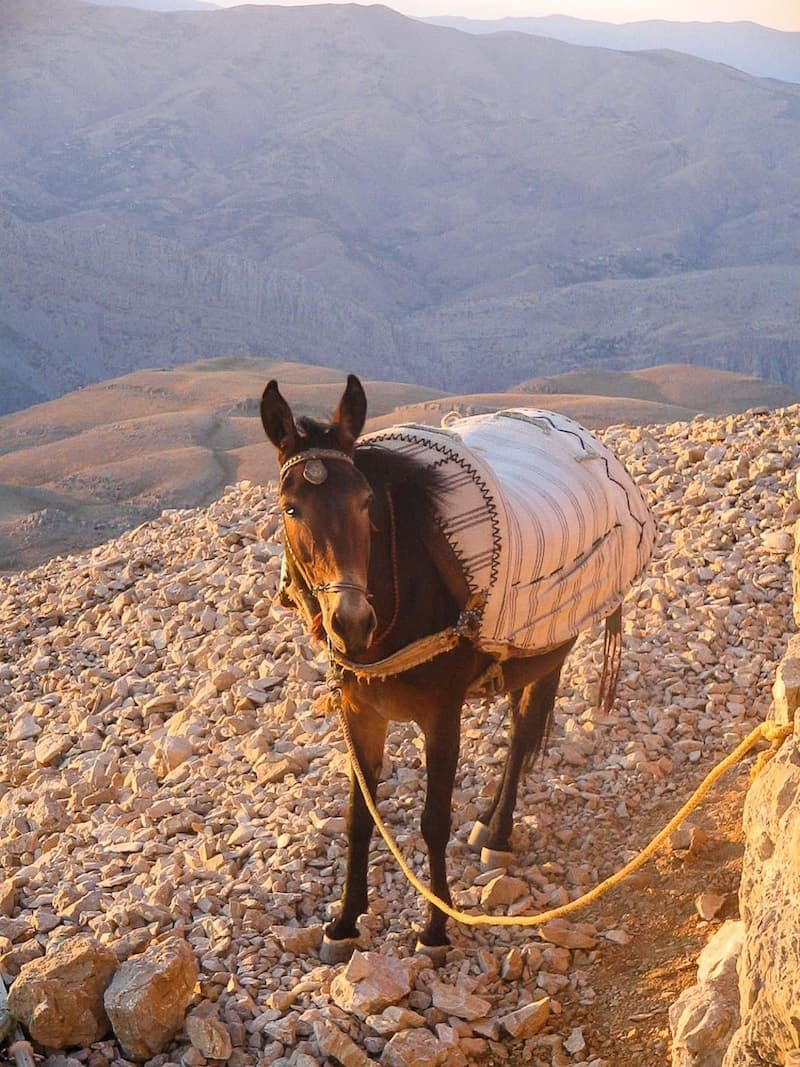 A donkey at the top of Mount Nemrut