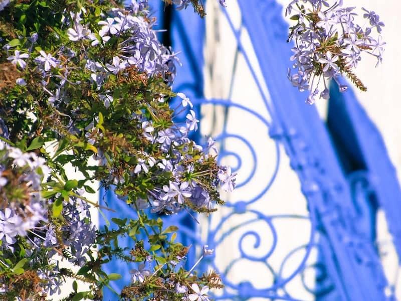 Jasmine flowers against blue metalwork