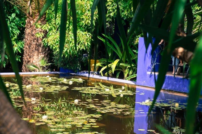 Pond at the Jardin Majorelle