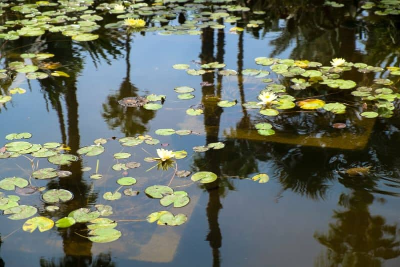 Reflection of palms in pond, Jardin Majorelle
