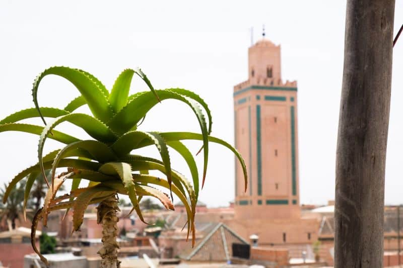 Koutoubia Mosque with plant in foreground