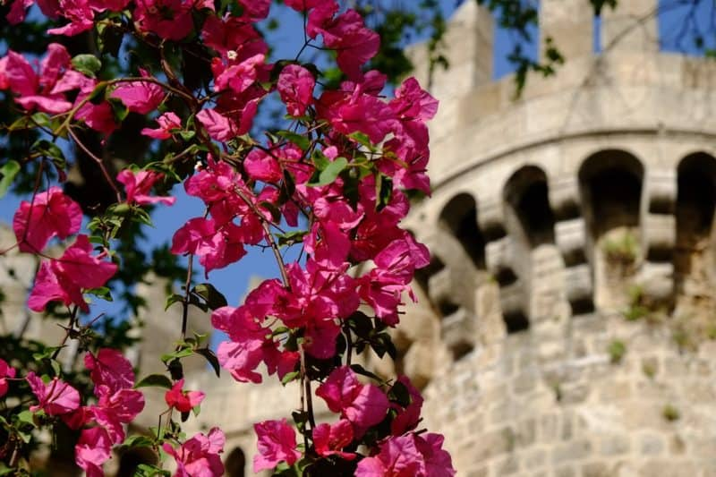 Flowers with Palace of the Grand Masters in the background