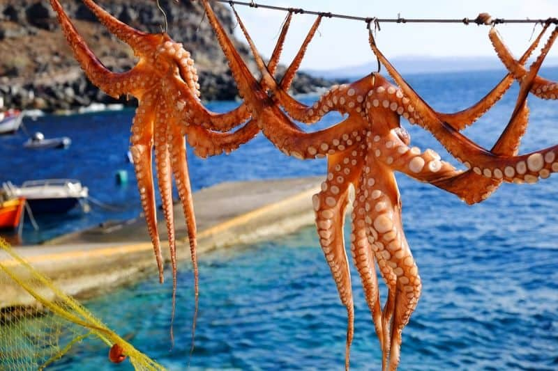 Octopus hanging to dry on Santorini