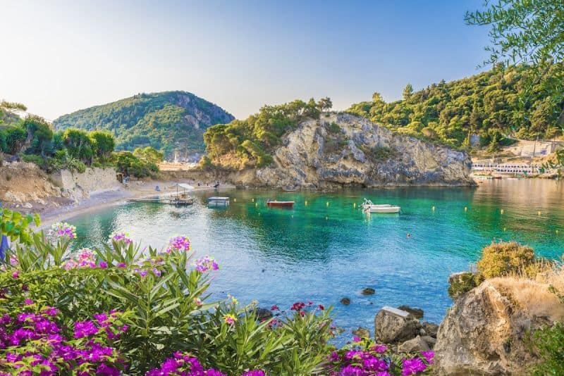 An emerald bay in Paleokastritsa with flowers in the foreground