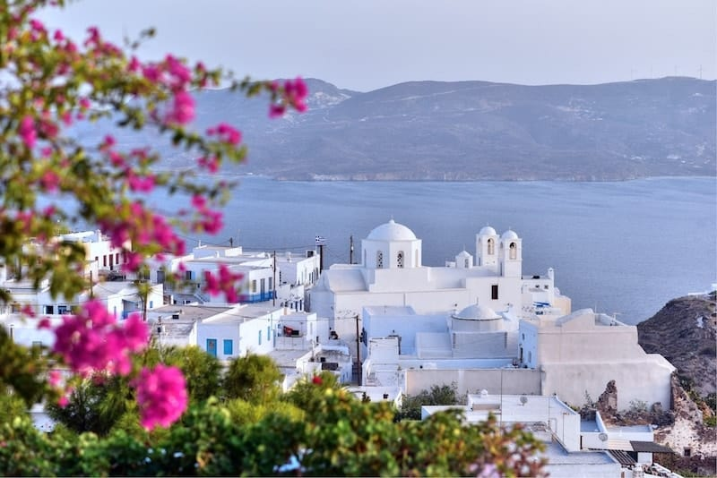 Whitewashed Plaka Milou with pink flowers in the foreground