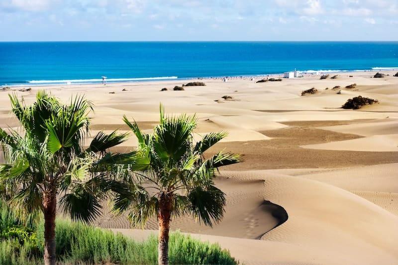 Palms and sand dunes of Maspalomas, Gran Canaria
