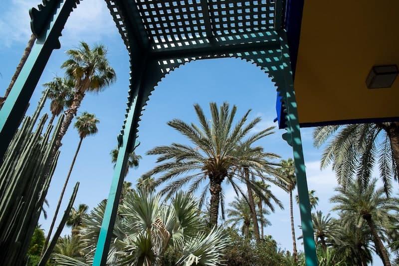 Towering palms at Jardin Majorelle
