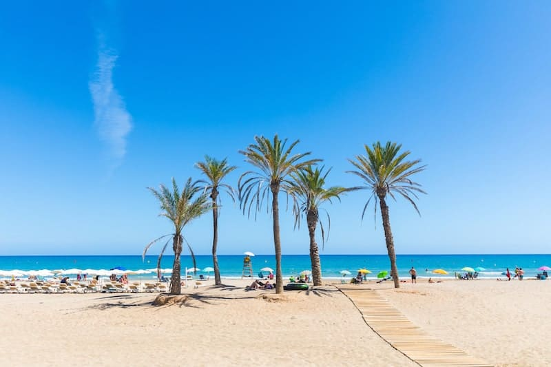 Palm trees on Alicante beach