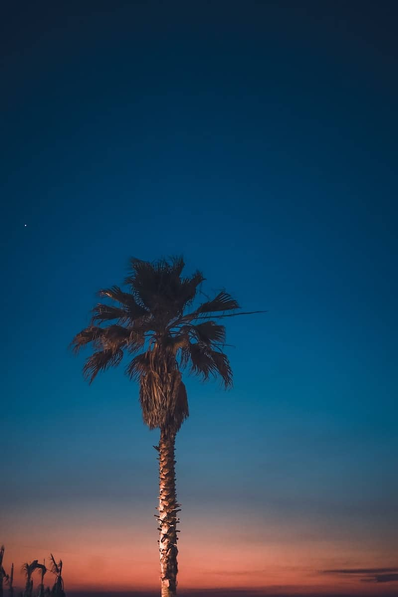 A lone palm tree against twilight sky