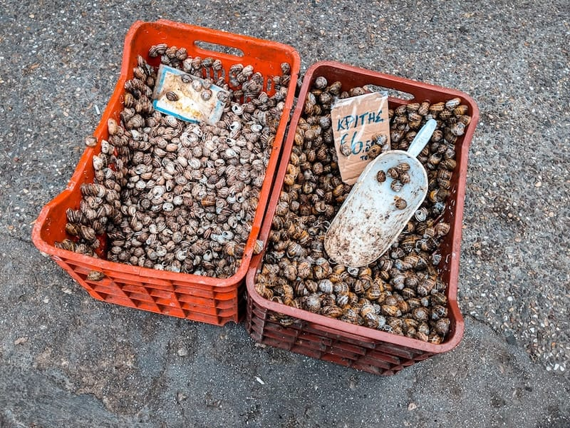 Crates of snails from Crete for sale
