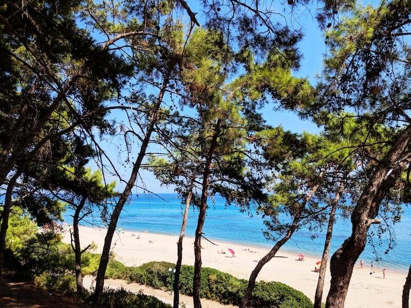 Skala beach through the pine trees