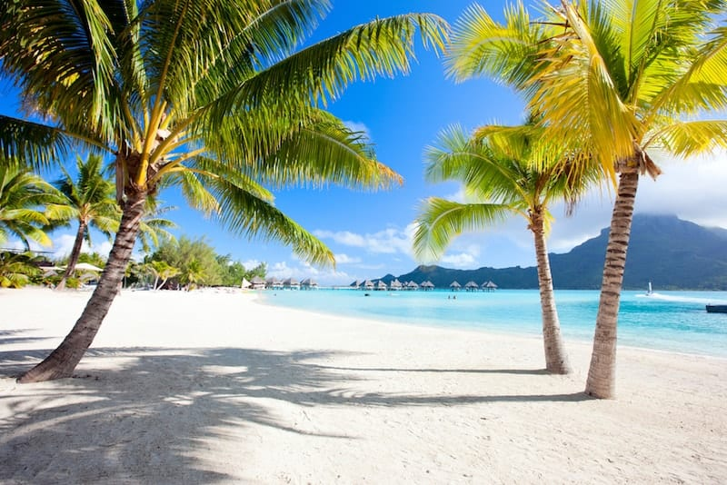 Palm trees on Bora Bora's sandy Matira beach