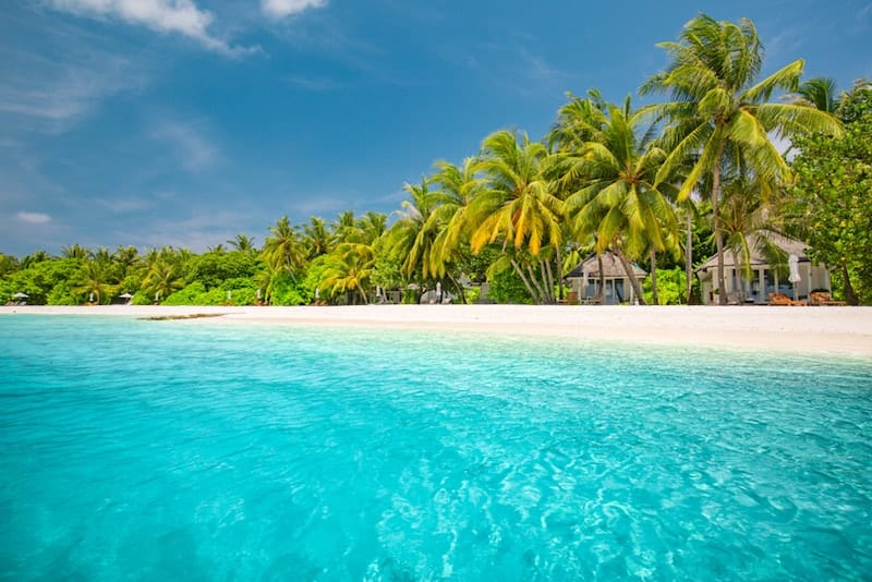 Exotic palms on Maldives beach