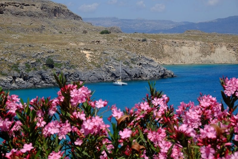catamaran anchored in Lindos bay, oleander in foreground
